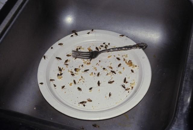 На фото: тараканы