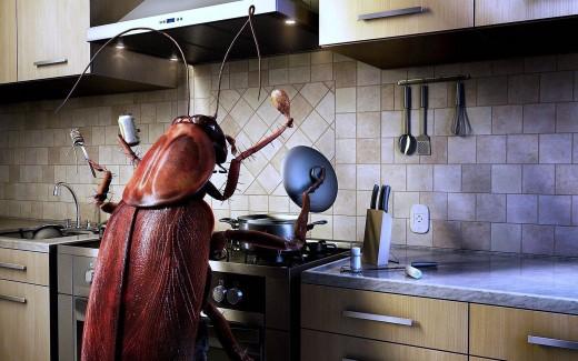 На фото: таракан на кухне
