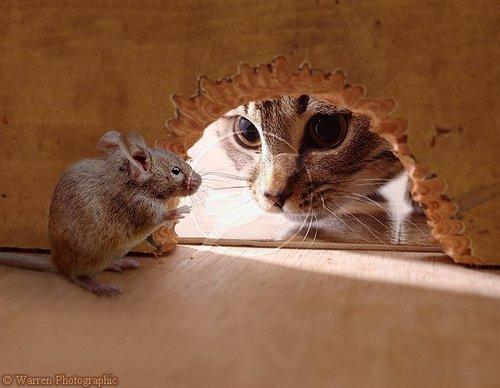 На фото: кот ловит мышей