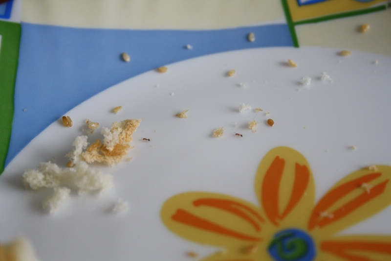На фото: муравьи на кухне