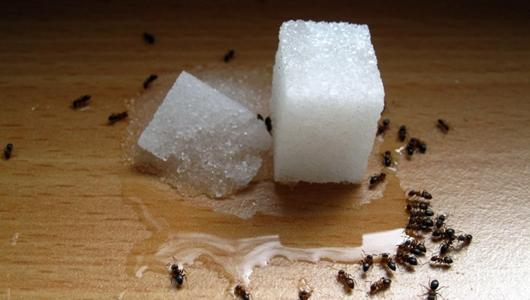 На фото: муравьи