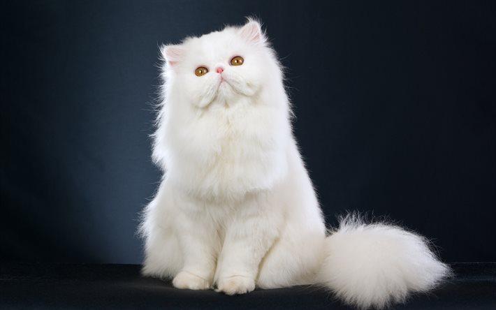 На фото: Кот