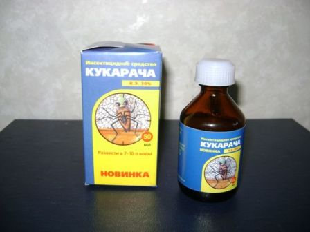 На фото: кукарача