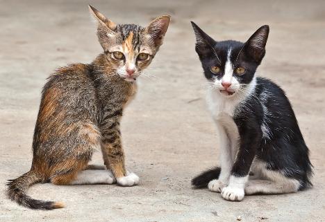 На фото: Бездомные животные