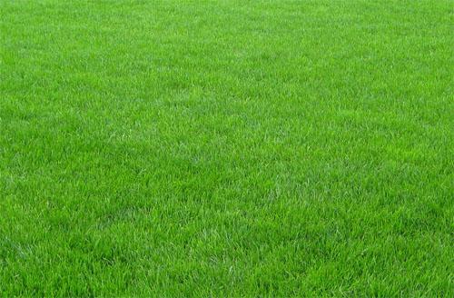 На фото: трава
