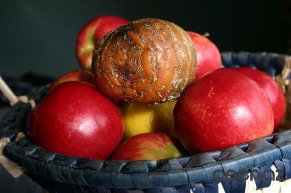На фото: гнилые фрукты