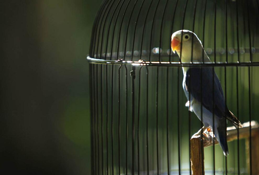 На фото: клетка для попугаев