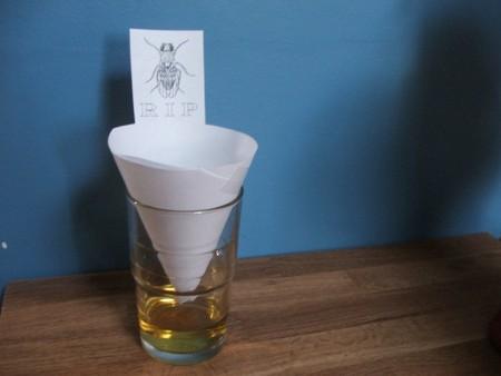 На фото: ловушка для мух