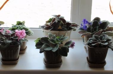 На фото: цветы